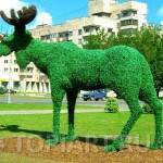 "Зеленая фигура ""Лось"" г. Гатчина www.topiart.ru"