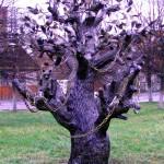 свадебные деревья