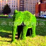 """Топиарная фигура """"Слоненок"""""""