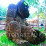 "Topiary sculpture ""King Kong"""