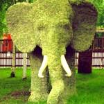 "Topiary sculpture ""Elefant"""
