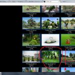 Зеленые фигуры воровство контента