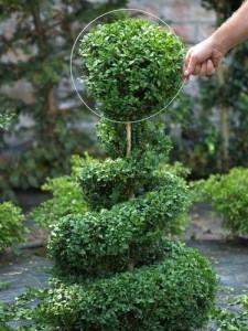 Topiary-cutting-2